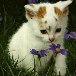 cat_flower