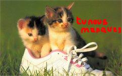 photo_chatons_basket